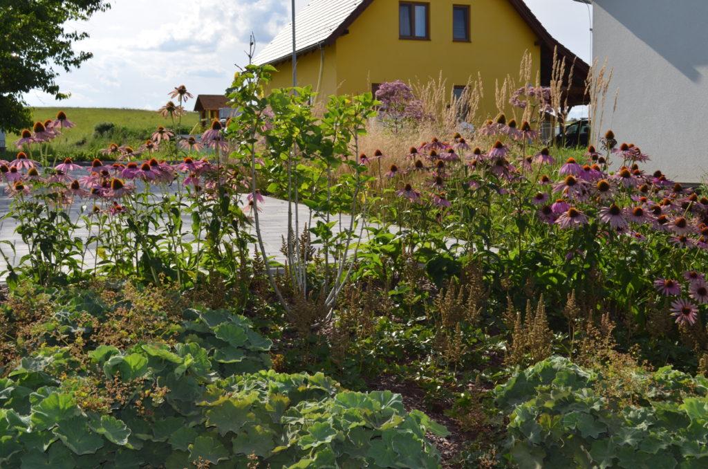 kvetoucí trvalky